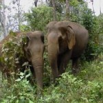 thailand-elephant-conservation